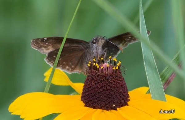 Butterfly with a birthday cake (photo by Dana Nesiti)