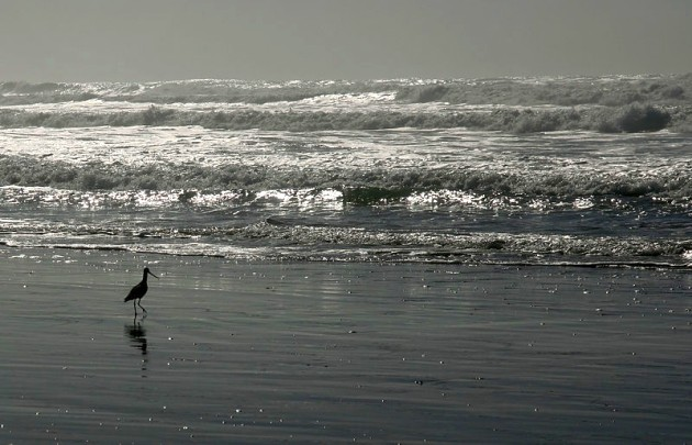 Waves and ! at Ocean Beach (photo by Broken Inaglory via Wikimedia Commons)