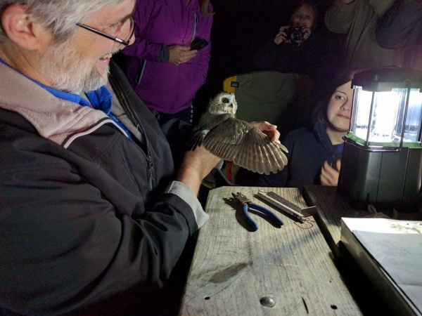 Bob spreads the owl's wing to examine the color of the wing feathers and determine its age (photo by Kathy Miller)