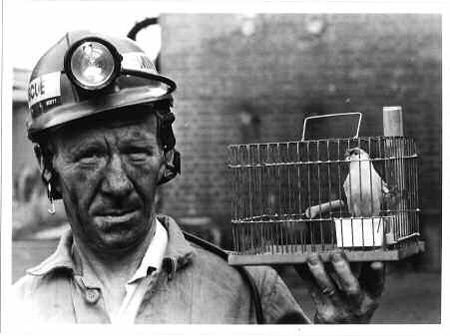 Station Officer John Scott holding a canary cage used in mines rescue training at Cannock Chase, UK (Image courtesy of the Museum of Cannock Chase. Copyright unknown)