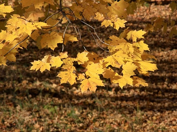 Fall foliage (photo by Chuck Tague)