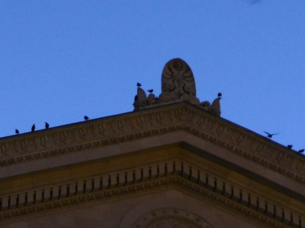 As night falls some crows choose Alumni Hall rooftop for their roost (photo by Kate St. John)