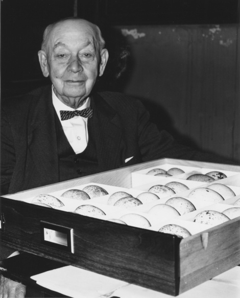 W.E. Clyde Todd, Curator of Ornithology 1914-1945, photo ca. 1966 as Honorary Curator of Birds' Eggs (photo courtesy Carnegie Museum of Natural History)
