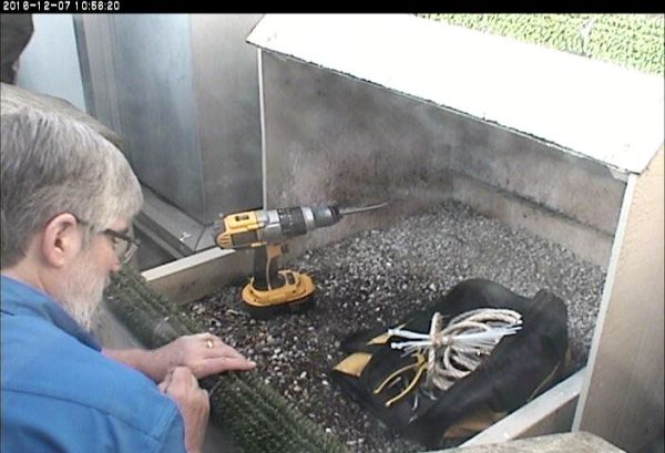 Bob reattaches the lower perch turf (photo from the National Aviary snapshot cam at Univ of Pittsburgh)