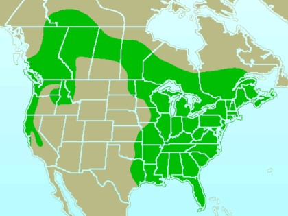Pileated woodpecker range map. Green means year-round. (from Wikimedia Commons)