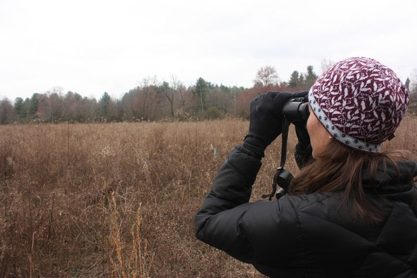 Scanning the field for birds (photo by Gary Peeples www.fws.gov/asheville/ via Wikimedia Commons)