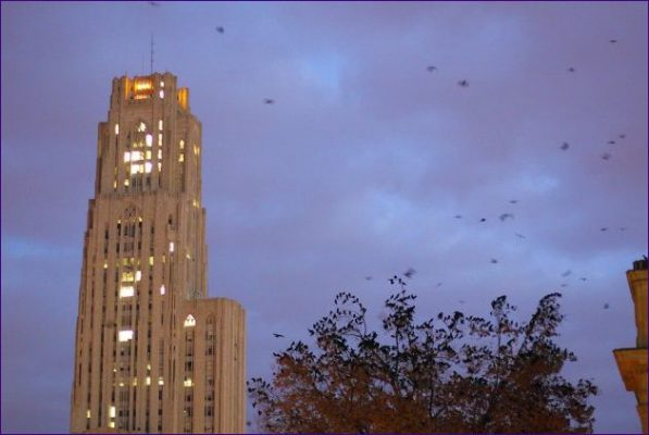 American crows coming in to roost near the Cathedral of Learning (photo by Peter Bell)