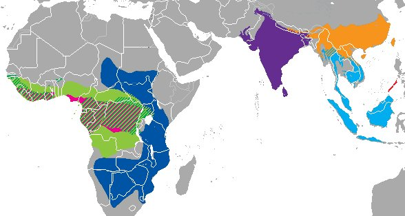 Range map of pangolin species (image from Wikimedia Commons)