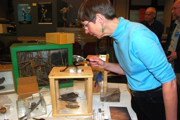 Kate St. John examines the spotted sandpiper egg (photo by Donna Foyle)