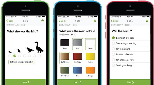To Identify a bird, answer 5 questions (screenshot from Merlin Bird ID app)