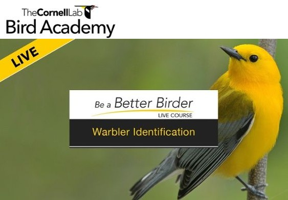 Cornell Bird Academy, Be a Better Birder: Warbler ID class, April 6 - May 18, 2017
