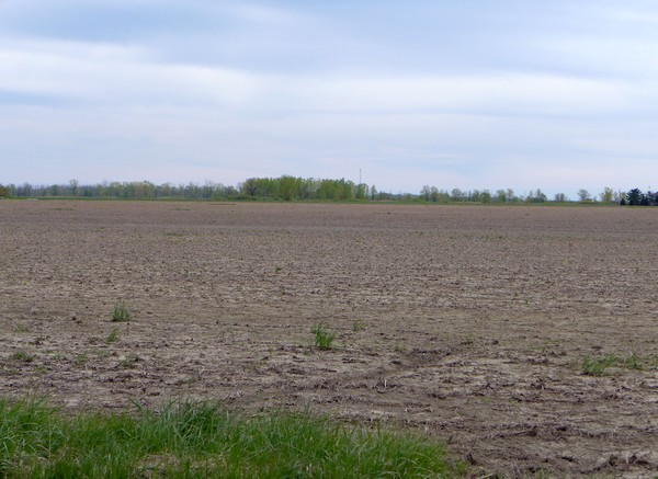 Acres of farmland without plants and insects, Ottawa County, Ohio, early May 2017 (photo by Kate St.John)