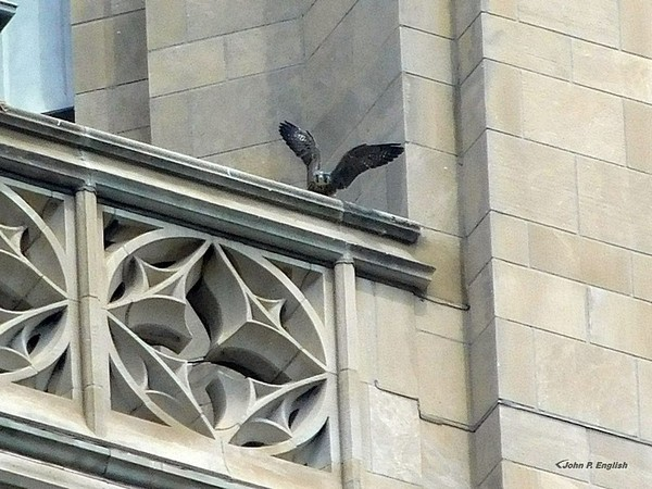 Flap-practice at the Cathedral of Learning, 4 June 2017 (photo by John English)