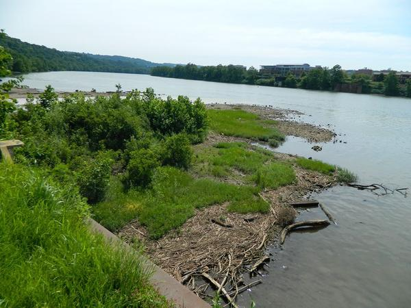 Mudflat at Duck Hollow, 10 July 2017 (photo by Don Kerr)