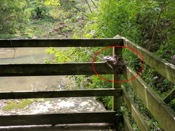 Flood debris snagged waist-high on this railing at Nine Mile Run in Frick Park (photo by Kate St. John)