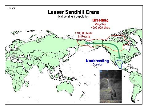 Some sandhill cranes breed in Russia (map from USGS)