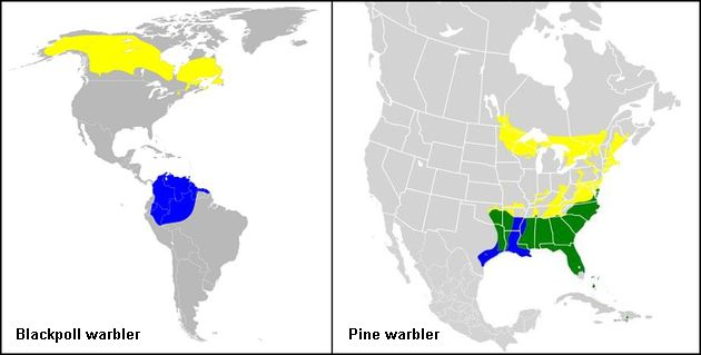 Range maps for Blackpoll and Pine warblers (maps from Wikimedia Commons) Colors: yellow=breeding, blue=wintering, green=year-round