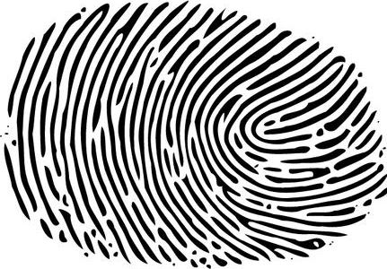 Fingerprint image from Wikimedia Commons