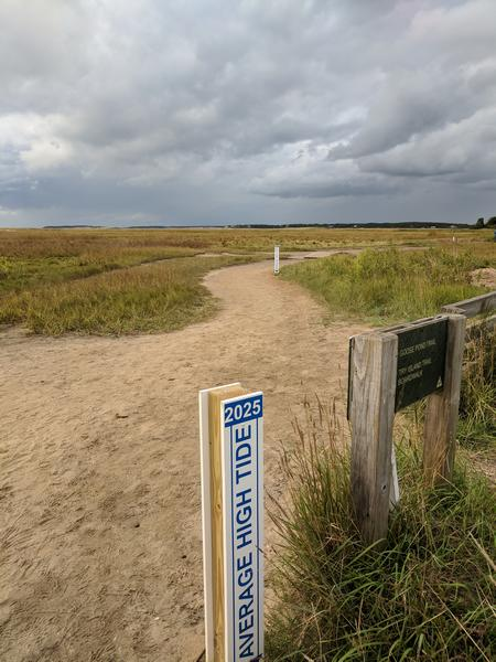 Only eight years from now, high tide will be this much higher at Wellfleet Bay (photo by Kate St.John)