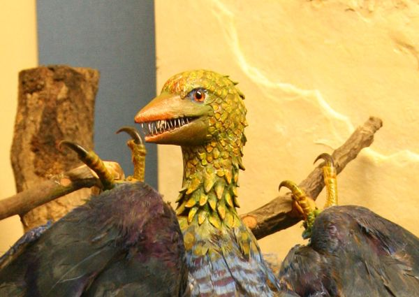 Model of Archaeopteryx on display at Geneva natural history museum (image via Wikimedia Commons)