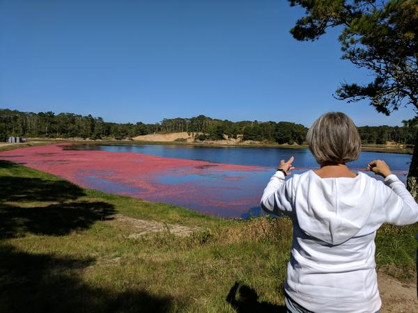 My sister-in-law describes how the floating cranberries are gathered (photo by Kate St. John)