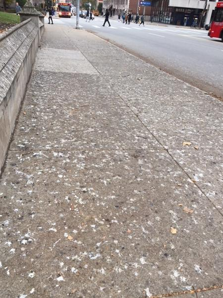 Sidewalk evidence of the crow roost near St. Paul's Cathedral, Nov 14, 2017 (photo by Claire Staples)