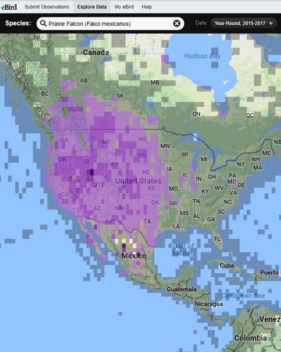 eBird range map of Prairie falcon, 2015-2017