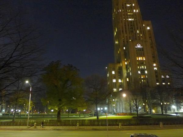 Well lit trees near the Cathedral of Learning with American crows roosting on top, 1 Dec 2017 (photo by Kate St.John)