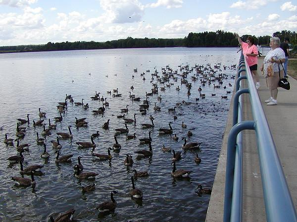 Tossing bread to fish, ducks and geese at Pymatuning Spillway area (photo by Brian Byrnes via Flickr, Creative Commons license)