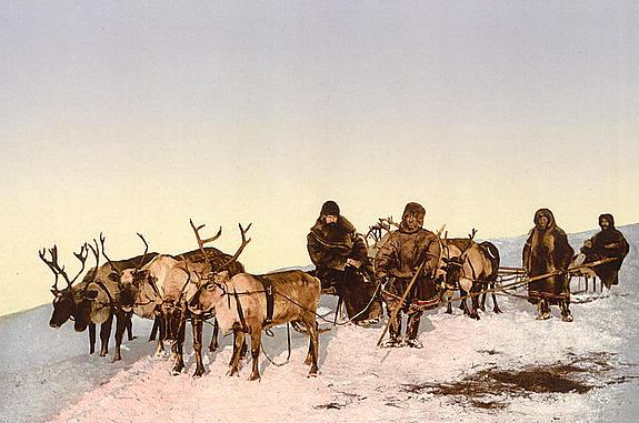 Reindeer pulling a sleigh circa 1900 in Archangel, Russia (photo from Wikimedia Commons)