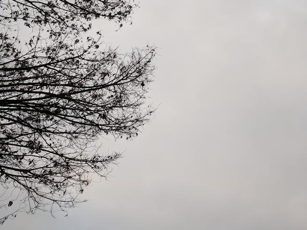 Overcast sky above a bare tree, Pittsburgh, PA, 11 Dec 2017 (photo by Kate St. John)
