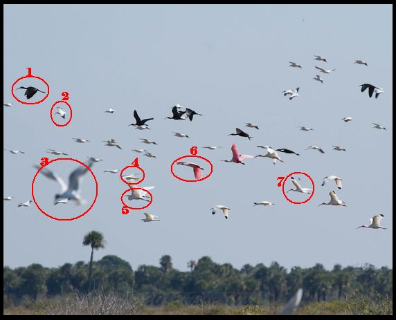 Annotated birds in flight (photo by Don Weiss)