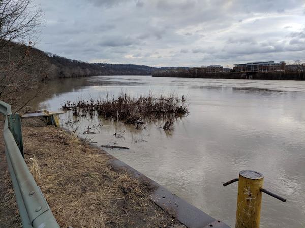 Moderately high water on the Monongahela River at Duck Hollow, 15 Feb 2018, 9:30am (photo by Kate St. John)