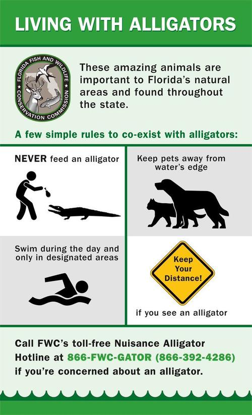 Alligator safety message from Florida WFC