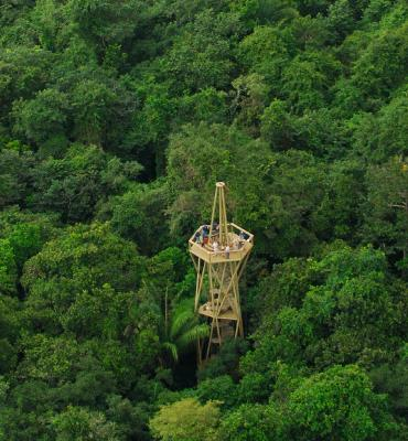 View of Panama Rainforest Discovery Center Tower (photo from the pipelineroad.org website)