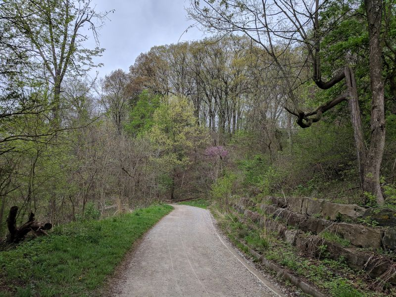 The trees have leaves and flowers at last, Schenley Park, 4 May 2018 (photo by Kate St. John)