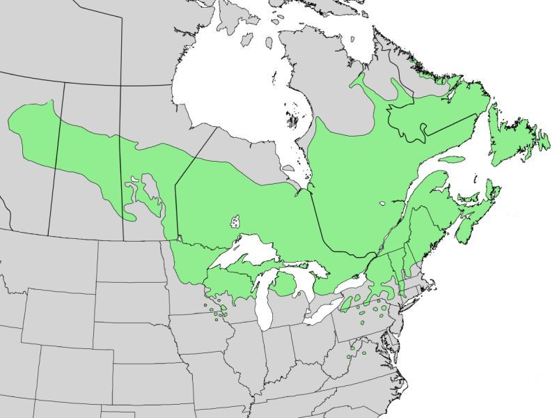 Balsam fir range map (image from Wikimedia Commons)