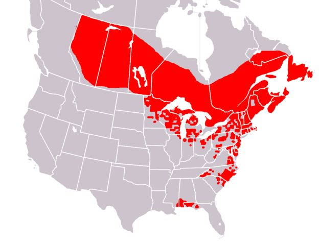 Range map of Sarracenia purpurea (image from Wikimedia Commons)
