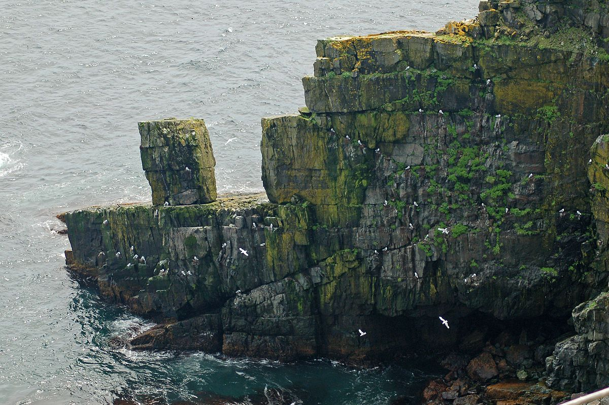 Gulls and black-legged kittiwakes nesting on Cape Pine cliffs, Newfoundland (photo from Wikimedia Commons)