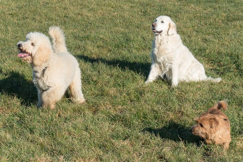 Dogs ready to play (photo from Wikimedia Commons)