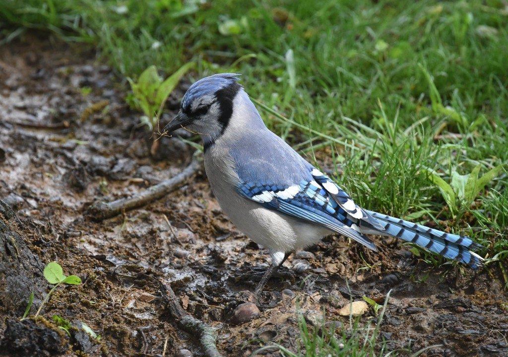 Songbirds | Outside My Window