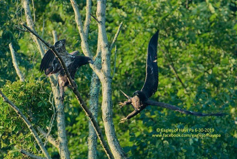 Birds of Prey | Outside My Window